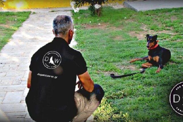 Εκπαίδευση Σκύλων - Θρακομακεδόνες - Πανόραμα - Dog Whisperer - Βλαχάκος Γιώργος